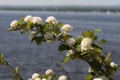 Ottawa River View (James Knox) Tags: ottawa ottawariver andrewhaydonpark