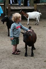 Jef en de geit
