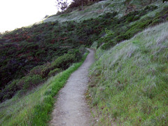 The Trail (Muir Beach, California, United States) Photo