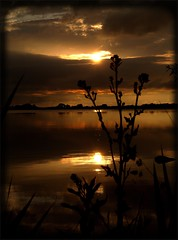 Sun setting before the rain (Kirsten M Lentoft) Tags: sunset sky cloud lake plant reflection water silhouette topc25 denmark searchthebest soe naturesfinest supershot arresø momse2600 diamondclassphotographer flickrdiamond seasunclouds flickrphotoaward flickrelite theunforgetablepictures kirstenmlentoft