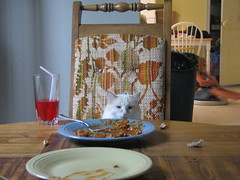 Powder at the dinner table