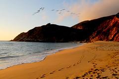 Sunset beach and homebound pelicans 日落鸪回 (Y. Peter Li Photography) Tags: ocean california sunset sea mountain bird beach pelicans birds coast sand san francisco pacific flock wave pelican hills piratetreasure