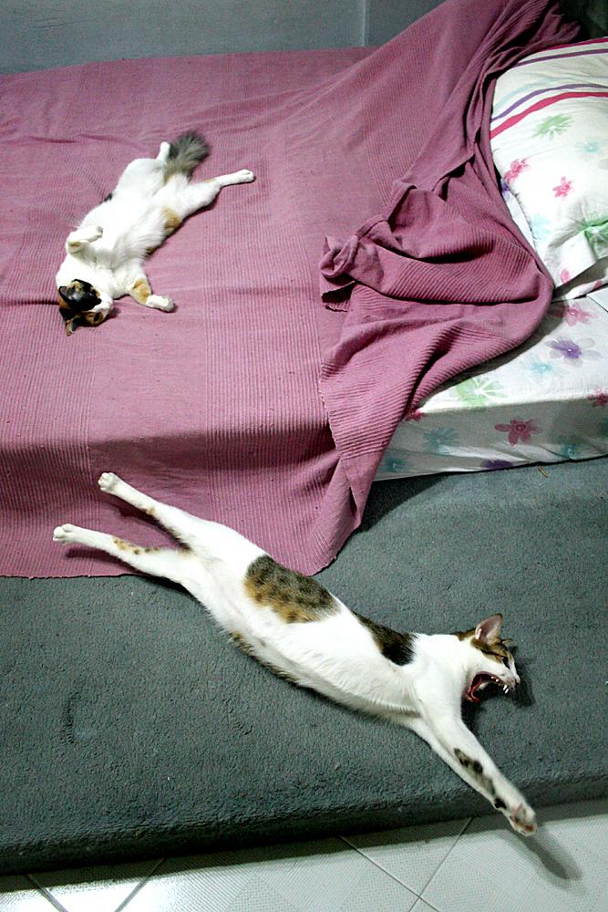 Ferocious napping
