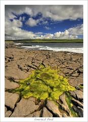 Emerald Pond (HaukeSteinberg.com) Tags: ireland seaweed green landscape coast clare doolin irland atlantic limestone burren algae karst hdr ire sigma1020 tonemapped tonemapping 400d superaplus aplusphoto superhearts platinumheartaward flickrslegend