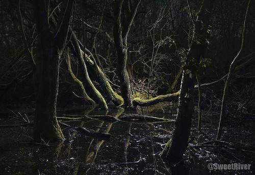 Swamp-7-2008