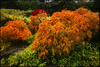 Dream in Color (Vinnyimages) Tags: seattle cold fall colors rain washington northwest japanesegardens inspiring kubotagardens vinnyimages wwwvinnyimagescom vinnyimagescom