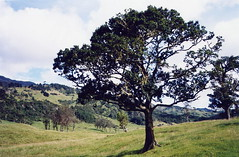 Otro rbol para adminar, Another tree to look (cayisn) Tags: paisajes tree rural landscape arbol colombia fincas haciendas flickrelite
