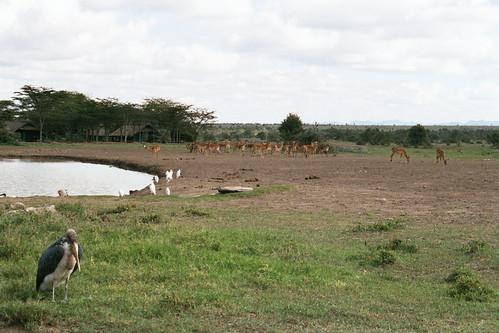 SW Antelopes with Bird
