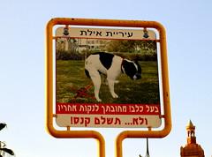 Eilat Israel July '07 - 2 (ohjaygee) Tags: city urban dog streets israel eilat digi grittiness nonlomo