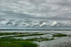 wadden 1 (Pieter Musterd) Tags: waddenzee wadden thenetherlands groningen waddengebied pieter007 aplusphoto