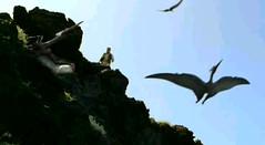 Pteranodon Condo