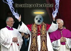 Papa das Focas (wagnergaione) Tags: preta foca