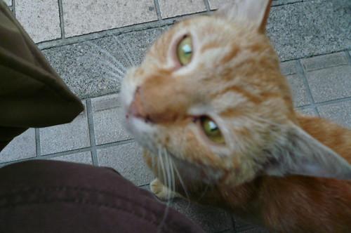 横浜のネコ03
