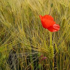 Te voici revenu (Croc'odile67) Tags: flowers nature fleurs botanique passiondclic