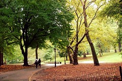 Central Park, NYC (faungg) Tags: park city nyc travel trees vacation people urban ny newyork umbrella nikon view metro sightseeing scene snap rainy  attraction 18200mm  d40x