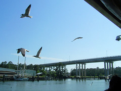 LuLu's Deck (Harley56Billie) Tags: summer seagulls boats alabama lulus brigde gulfshores lucybuffet