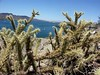...most cactus infested hill we co…
