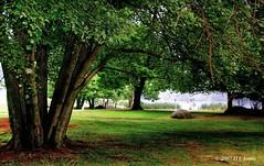 A Walk in the Park ( D L Ennis) Tags: mist nature misty fog virginia foggy trail blueridgeparkway awalkinthepark peaksofotter abbotlake dlennis archedfootbridge