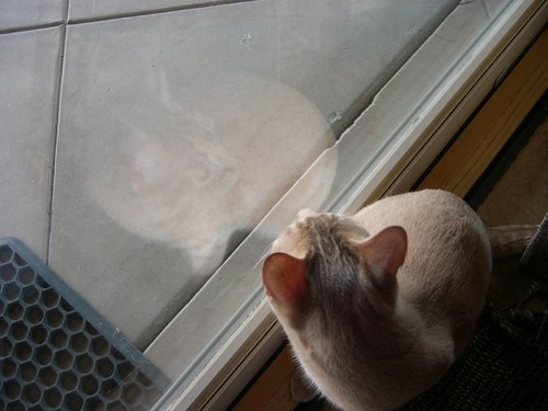 Cat reflection
