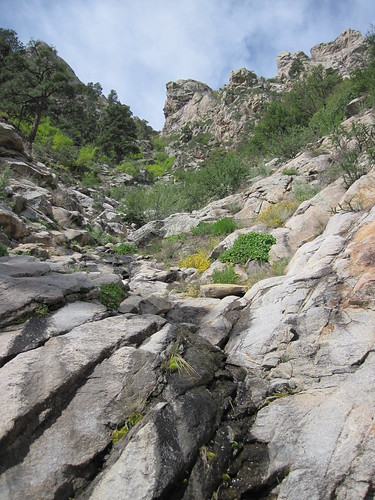 Small Creek On the Organ Mountains