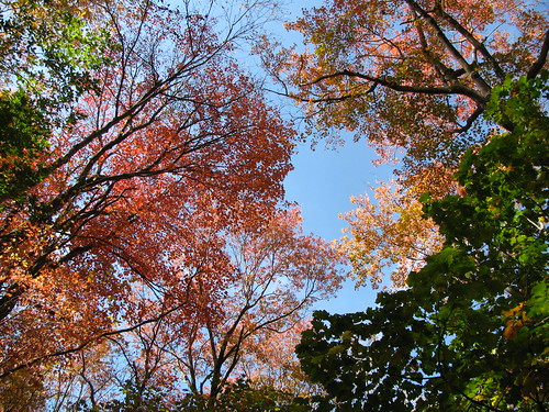 red leaves above