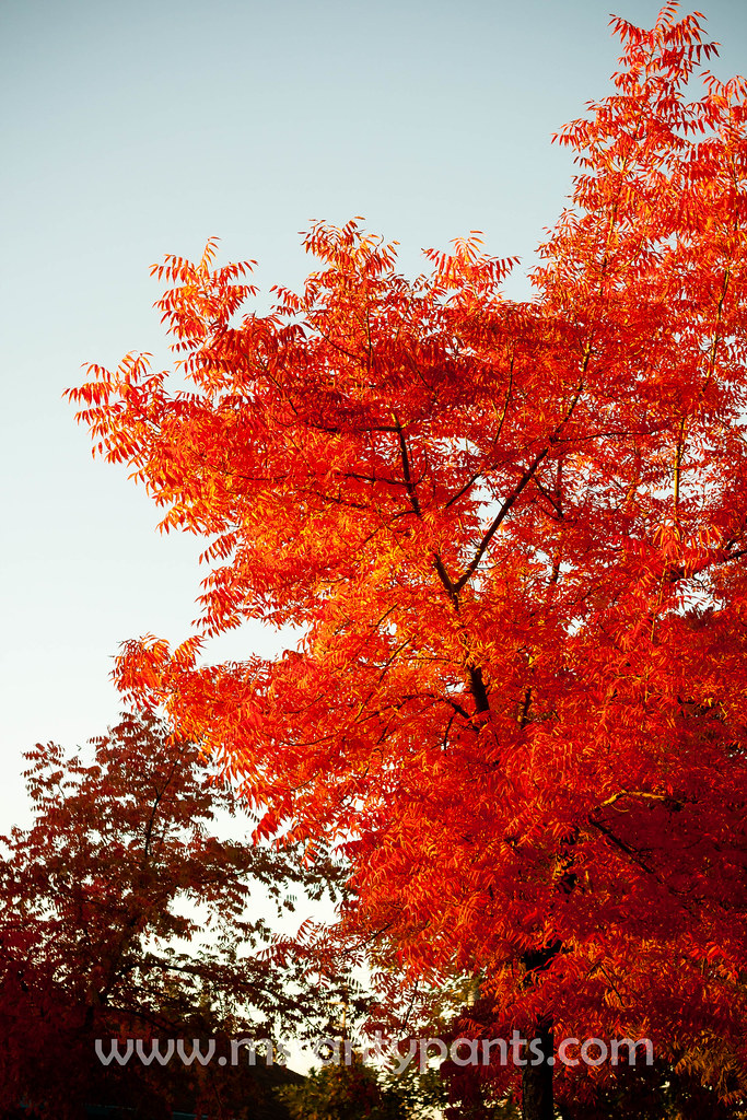 Fall Color 2010-14.jpg