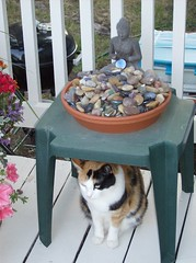 Ivy and her friend Mr. Buddha (Fran 53) Tags: flowers summer cat buddha ivy lucky quarters leprechaun