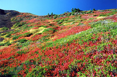 Colors of Nature (justb) Tags: blue autumn red orange mountain lake mountains color green fall film nature colors yellow backlight iso100 flora colorful bc natural bright meadow fujifilm coquihalla slope blueberries colorphotoaward aplusphoto