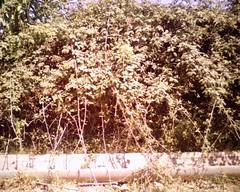 Tabgha Milli