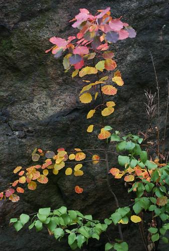 Autumn Colours -6