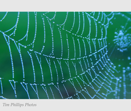 Spider Web by tim phillips photos