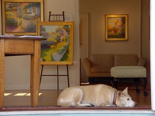 art gallery dog