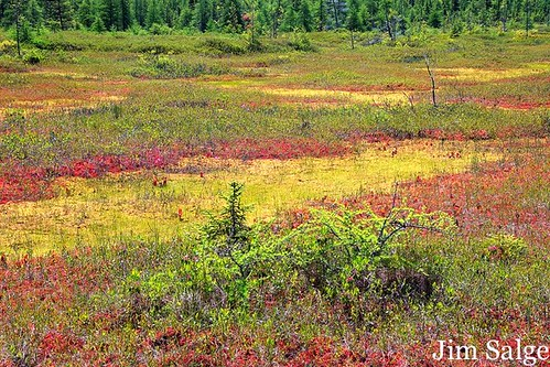 Colors in the Peatland