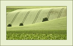 Grn..      (green..) (alfred.hausberger) Tags: green sommer felder fields grn ernte niederbayern strukturen lowerbavaria hgelland updatecollection feldstrukturen