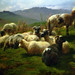 Rosa Bonheur, Sheep in the Highlands, detail with flock