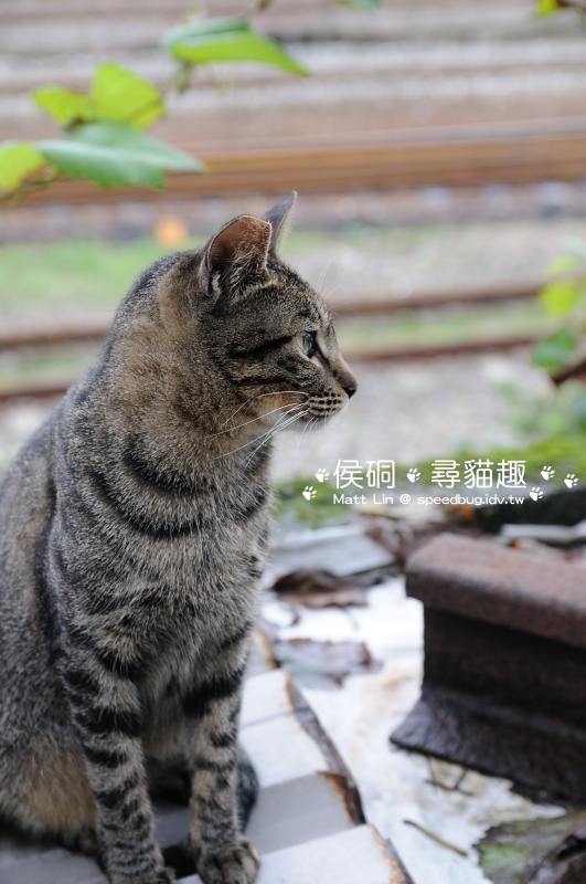 DSC_4696_01.JPG