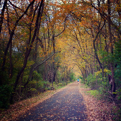 297/365: Boulevard of Autumn Leaves (pixelmama) Tags: autumn fall october foxriver jogger gettyimages 2010 lesarendsforestpreserve project365 bataviaillinois 3652010