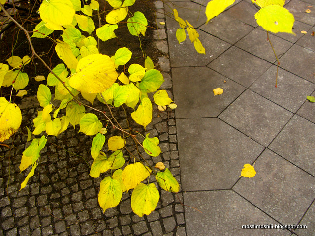 ♥ yellow ♥
