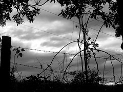 """The freedom lines"" (YAZMDG (16,000 images)) Tags: blackandwhite bw black sepia dark studio lowlight noir gloomy y noiretblanc tint nb sombre ambient blackout yaz obscure obscur melancholic absence shadowy lightdark melancholie lacunae obscurite lacune yazminamicheledegaye yazmdg obscuritee ystudio"