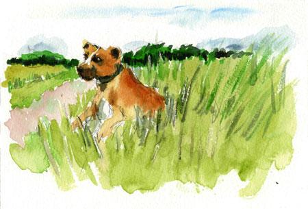 rufuslonggrass