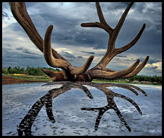 friendly elk (in touch) Tags: canada reflection water car rain clouds dark drops quebec stormy chevy elk impala safaripark naturesfinest blueribbonwinner supershot anawesomeshot superaplus aplusphoto wowiekazowie diamondclassphotographer flickrdiamond superhearts excellentphotographerawards pentaxoptios60 aaroncoyle dblringexcellence