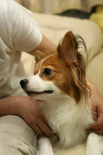 見つめあう、飼い主と愛犬(^^)
