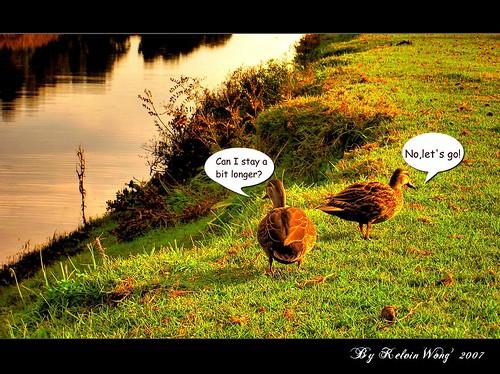 Duck's Talk ????
