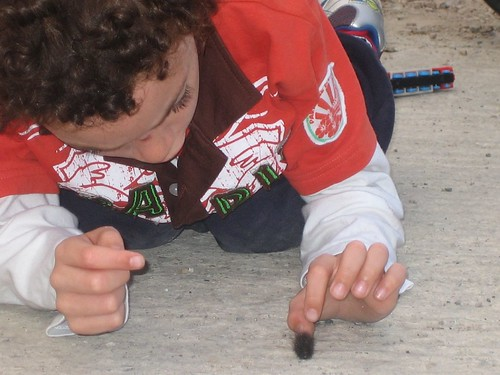 Duncan looking closely at a caterpillar