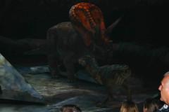 Torosaurus VS Baby Tyrannosaurus