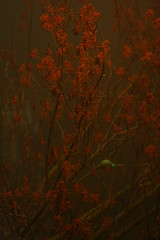 red tree through mist