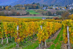 Photo en couleurs (Michele*mp slowly catching up) Tags: autumn mountain france nature colors rural montagne automne landscape countryside vineyard october europe couleurs meadows savoie paysage prairies campagne vignes vignoble soe octobre myans michelemp