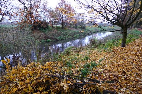 Herbstliche Nidda bei Bad Vilbel. November 2010
