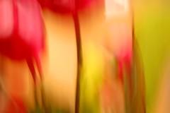 La energía de los colores! - by marcela paolantonio