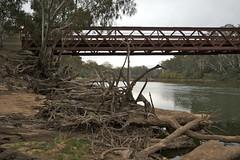 logs (yewenyi) Tags: sf railroad bridge river logs railway australia victoria vic aus murrayriver oceania stateforest barooga baroogastateforest